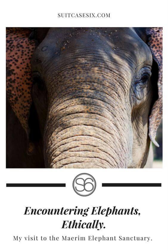 Encountering Elephants Ethically.