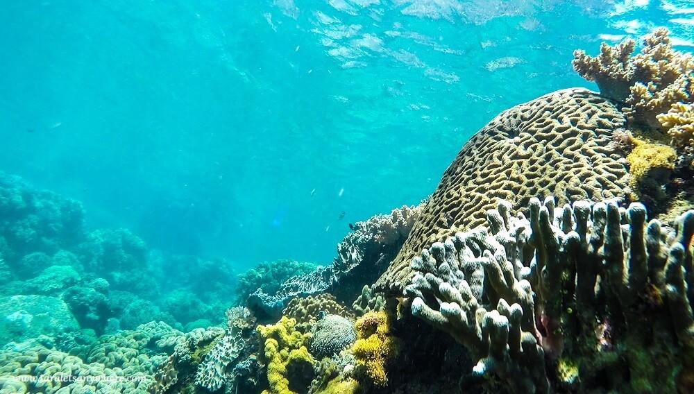 colorful corals on apo island