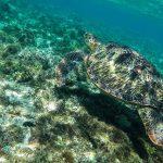 8 Environmentally Friendly Adventures to Discover Around the World