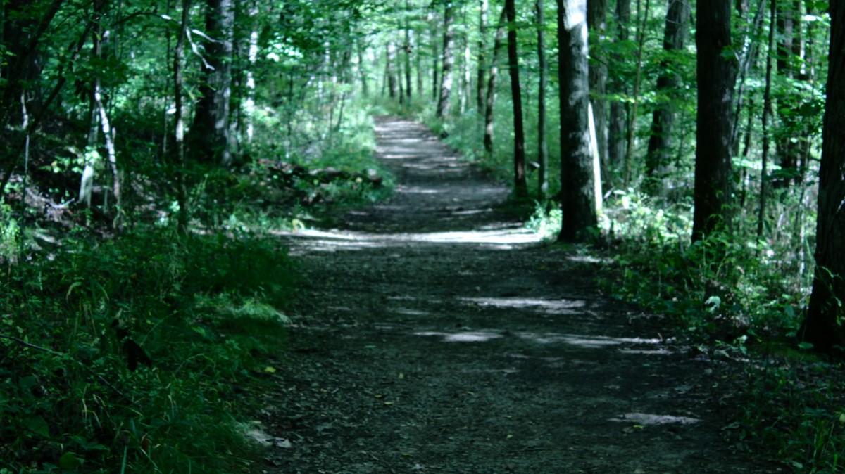 A walking path at Griffy Lake.